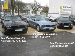 Mustangs.JPG